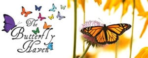 Butterfly Education Awareness Day at Butterfly Haven