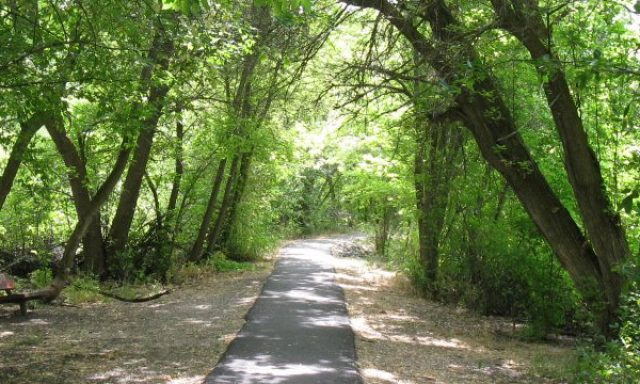 Cherry Springs Nature Trail
