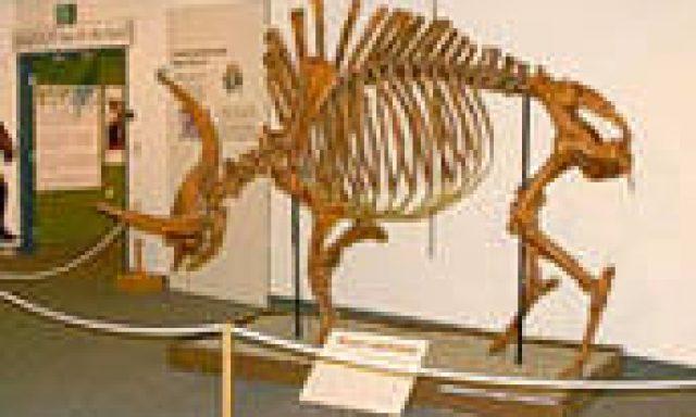 Idaho Museum of Natural History