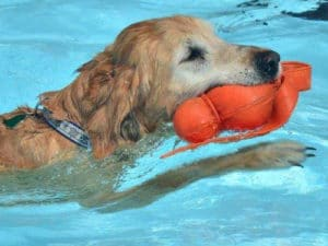 Dogapoolooza - Open Swim for Dogs in Lava Hot Springs