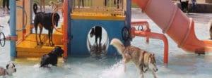 Pocatello Animal Services Splash Dance For Dogs