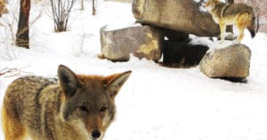 Wild winter weekends at Zoo Idaho in Pocatello
